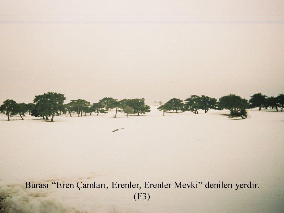Burası Eren Çamları, Erenler, Erenler Mevki denilen yerdir. (F3)