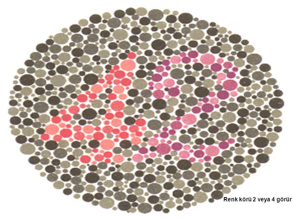 Renk körü 2 veya 4 görür