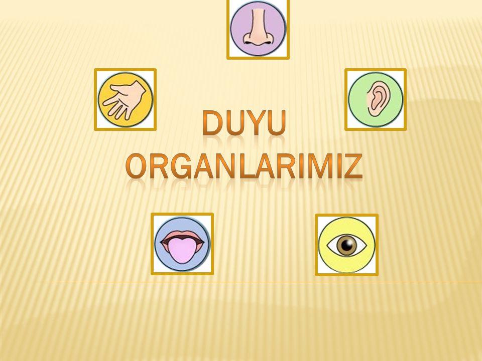 DUYU ORGANLARIMIZ Duyu organlarımız
