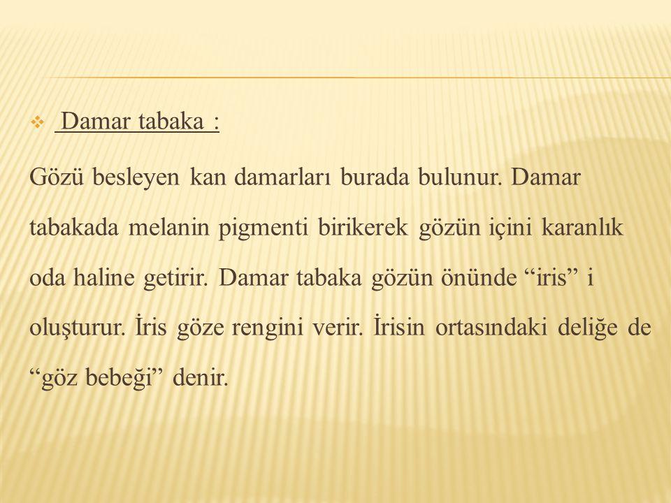 Damar tabaka :