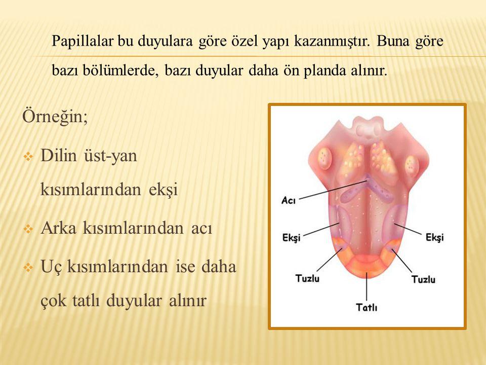 Dilin üst-yan kısımlarından ekşi