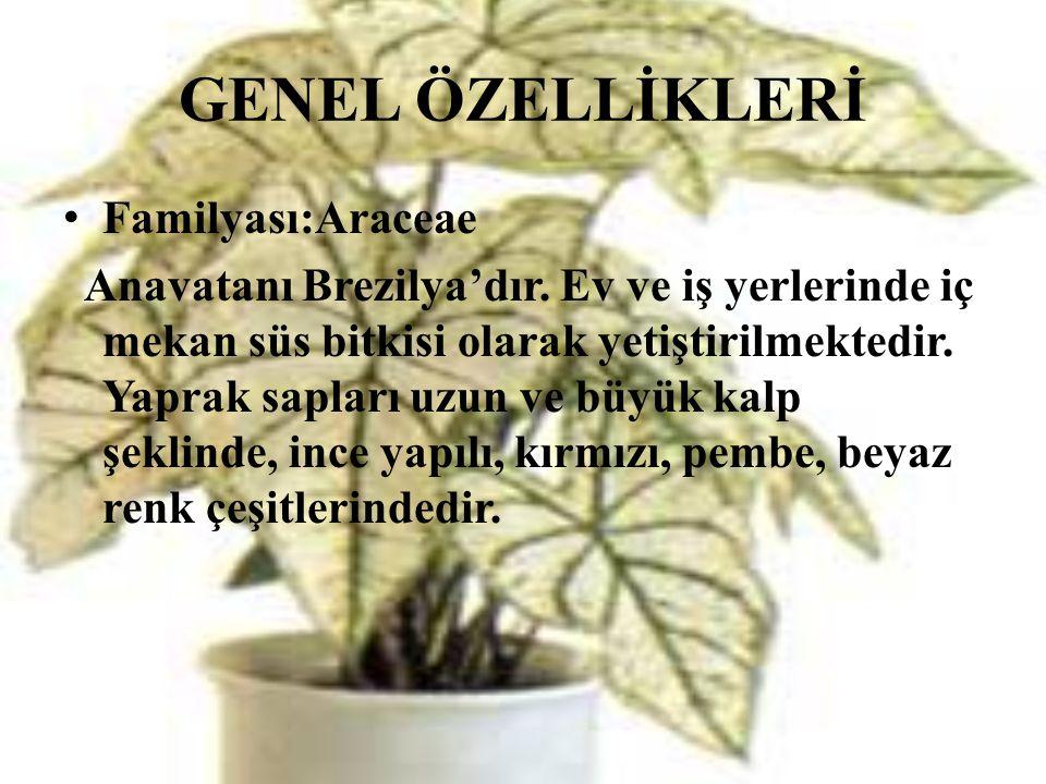 GENEL ÖZELLİKLERİ Familyası:Araceae