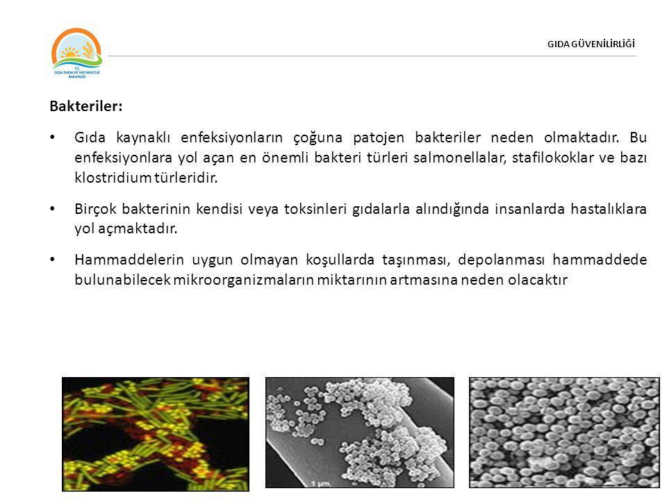 GIDA GÜVENİLİRLİĞİ Bakteriler: