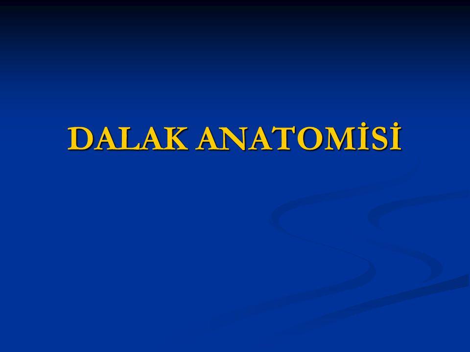 DALAK ANATOMİSİ