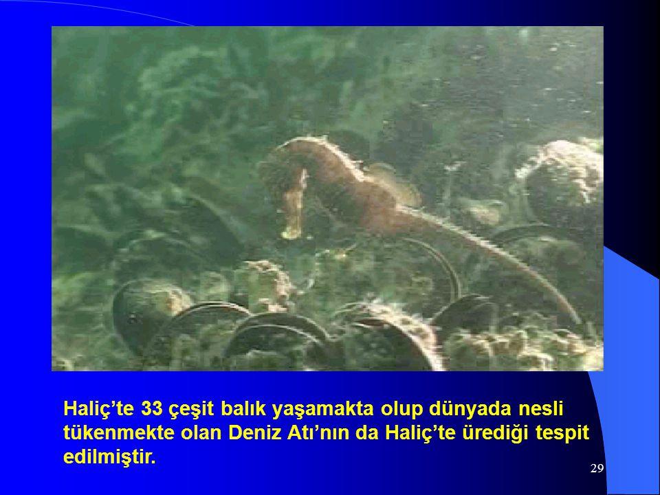 Haliç'te 33 çeşit balık yaşamakta olup dünyada nesli tükenmekte olan Deniz Atı'nın da Haliç'te ürediği tespit edilmiştir.