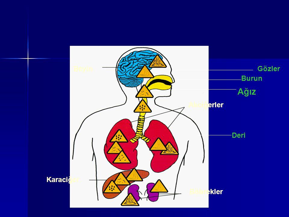 Beyin Gözler Burun Ağız Akciğerler Deri Karaciğer Böbrekler