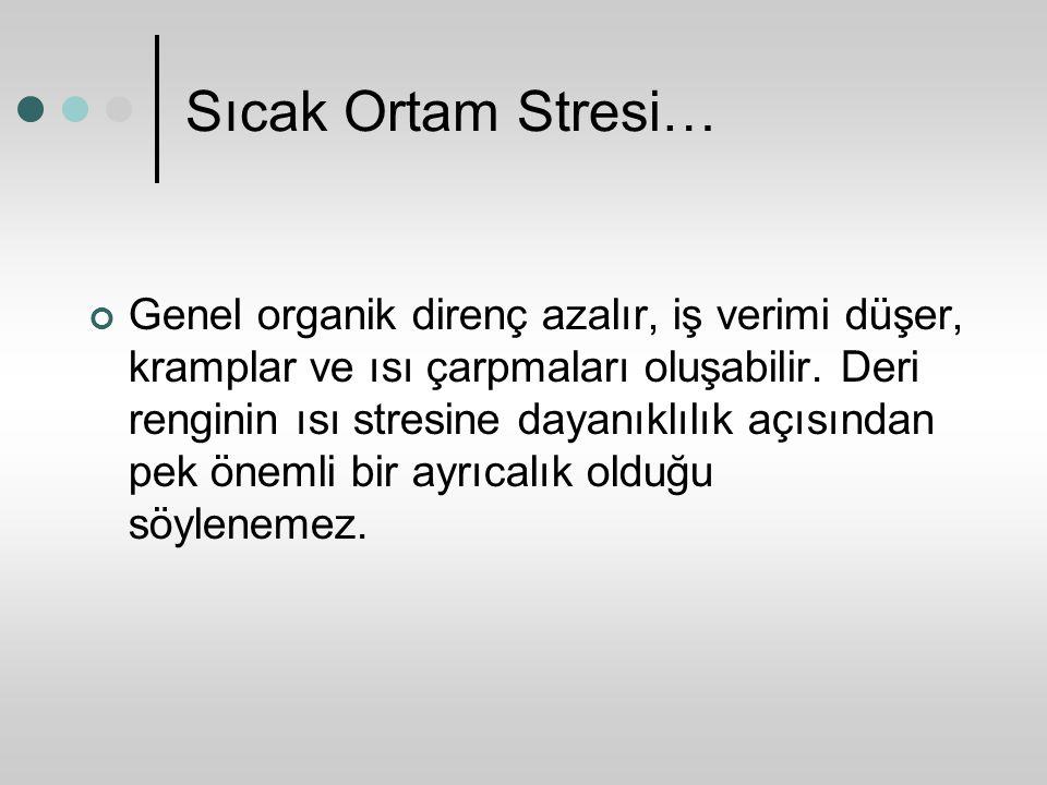 Sıcak Ortam Stresi…
