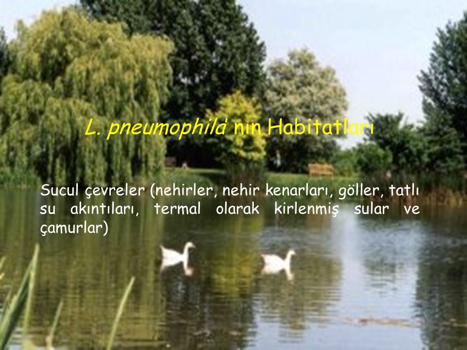 L. pneumophila' nın Habitatları