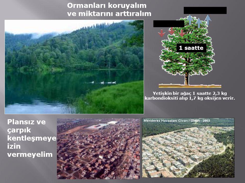 Ormanları koruyalım ve miktarını arttıralım