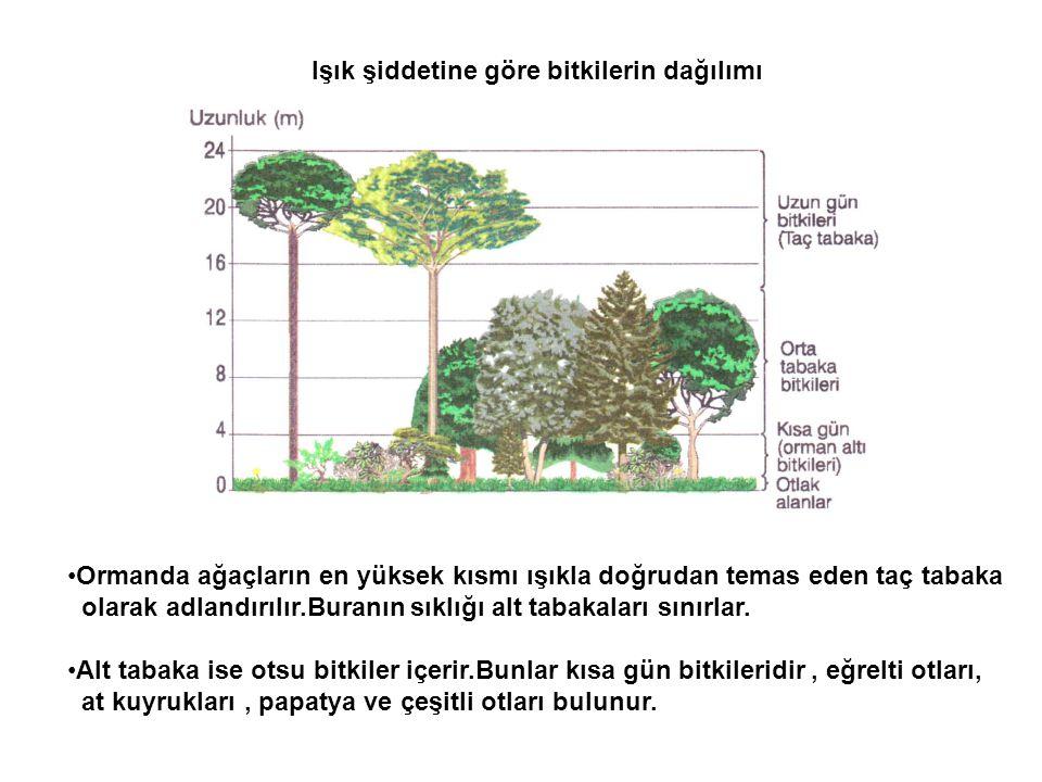 Işık şiddetine göre bitkilerin dağılımı