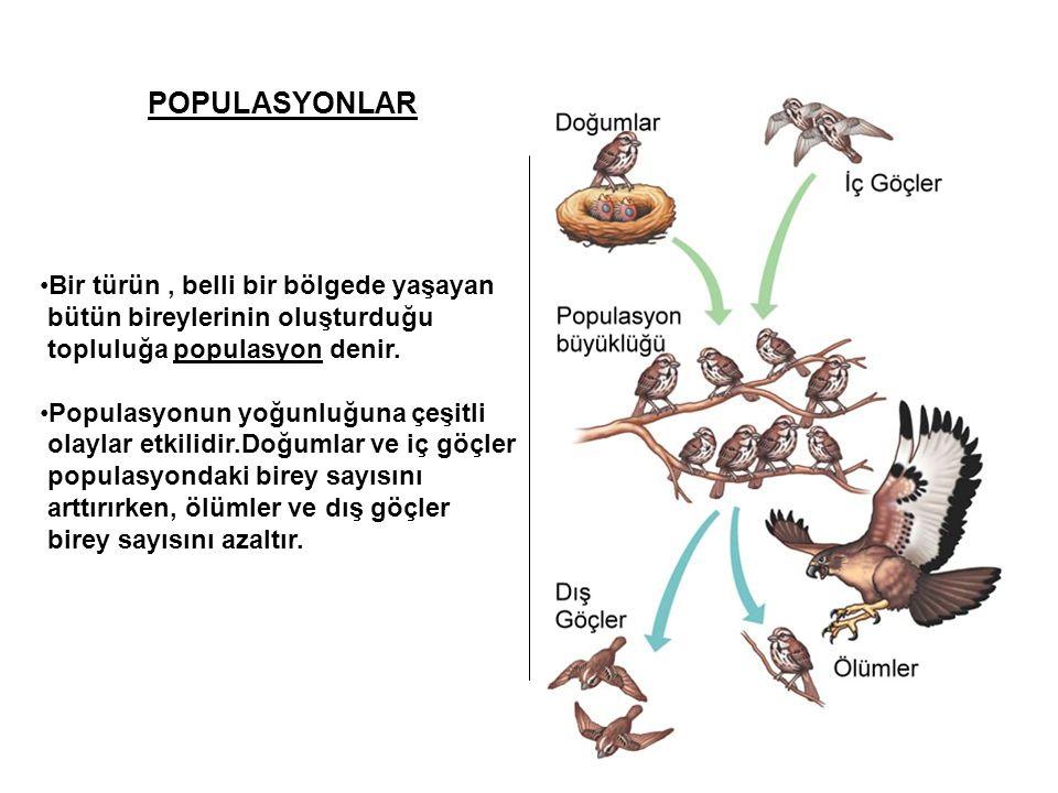 POPULASYONLAR Bir türün , belli bir bölgede yaşayan