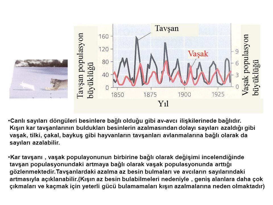 Canlı sayıları döngüleri besinlere bağlı olduğu gibi av-avcı ilişkilerinede bağlıdır.