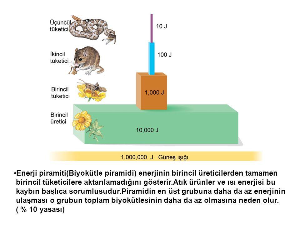 Enerji piramiti(Biyokütle piramidi) enerjinin birincil üreticilerden tamamen