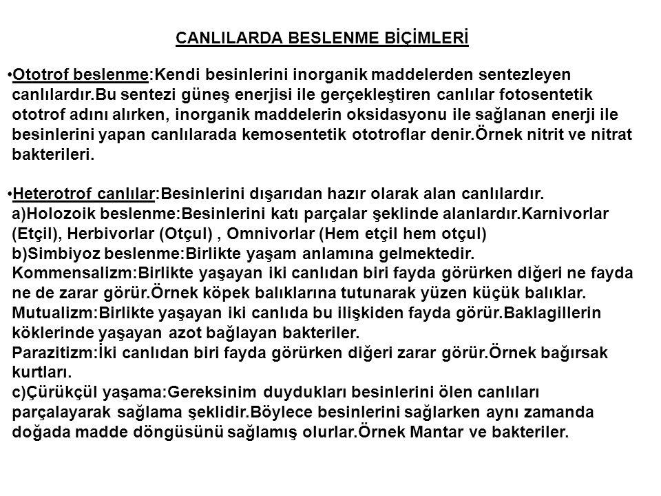 CANLILARDA BESLENME BİÇİMLERİ