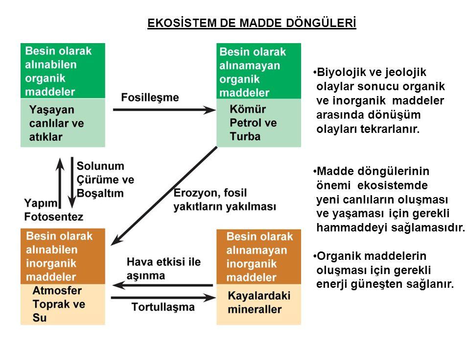 EKOSİSTEM DE MADDE DÖNGÜLERİ