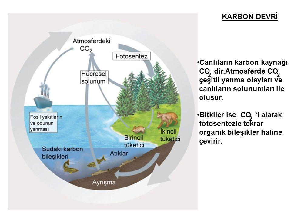 Canlıların karbon kaynağı CO dir.Atmosferde CO