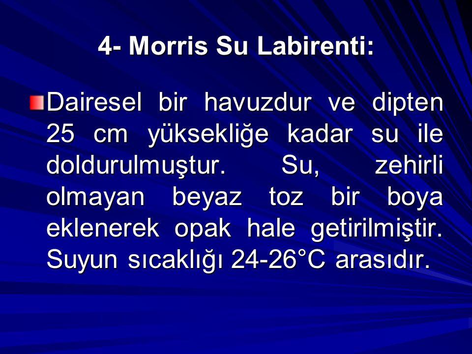 4- Morris Su Labirenti: