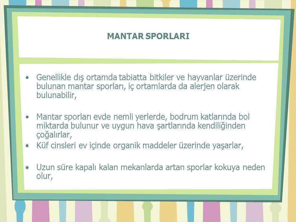 MANTAR SPORLARI Genellikle dış ortamda tabiatta bitkiler ve hayvanlar üzerinde bulunan mantar sporları, iç ortamlarda da alerjen olarak bulunabilir,