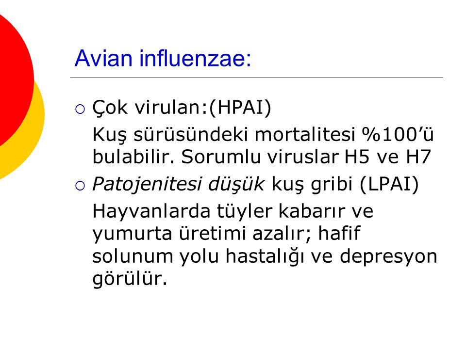Avian influenzae: Çok virulan:(HPAI)