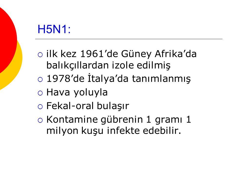 H5N1: ilk kez 1961'de Güney Afrika'da balıkçıllardan izole edilmiş