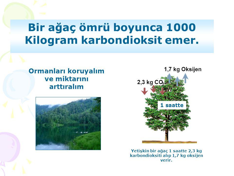 Bir ağaç ömrü boyunca 1000 Kilogram karbondioksit emer.