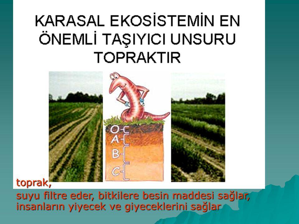 toprak, suyu filtre eder, bitkilere besin maddesi sağlar, insanların yiyecek ve giyeceklerini sağlar.