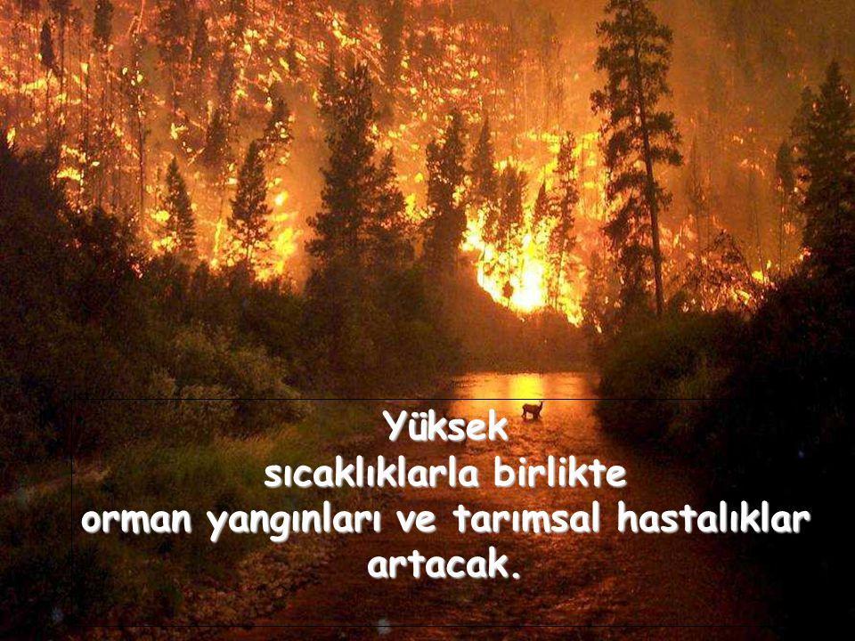 Yüksek sıcaklıklarla birlikte orman yangınları ve tarımsal hastalıklar artacak.