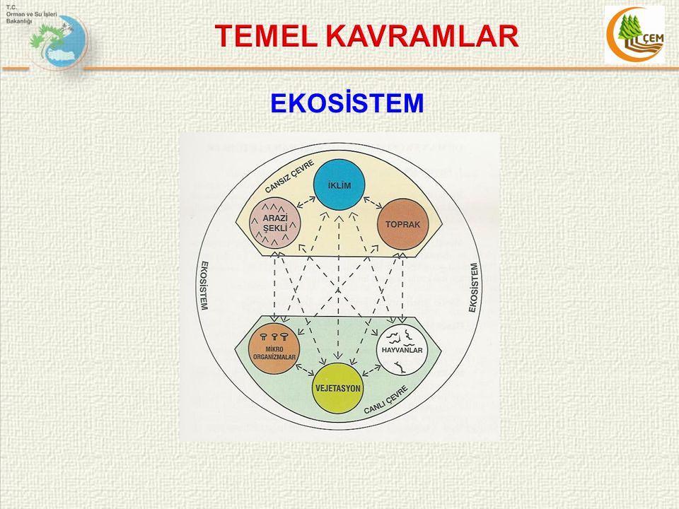 TEMEL KAVRAMLAR EKOSİSTEM