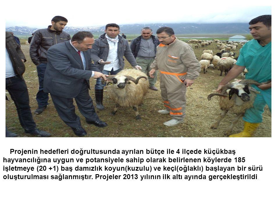 Projenin hedefleri doğrultusunda ayrılan bütçe ile 4 ilçede küçükbaş hayvancılığına uygun ve potansiyele sahip olarak belirlenen köylerde 185 işletmeye (20 +1) baş damızlık koyun(kuzulu) ve keçi(oğlaklı) başlayan bir sürü oluşturulması sağlanmıştır.