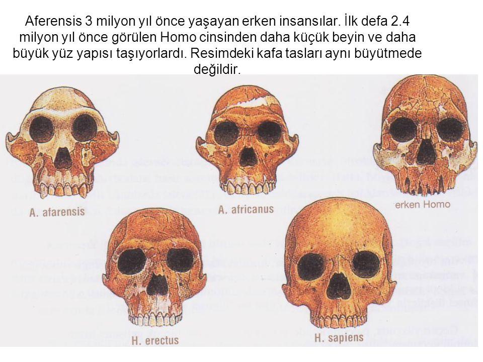 Aferensis 3 milyon yıl önce yaşayan erken insansılar. İlk defa 2