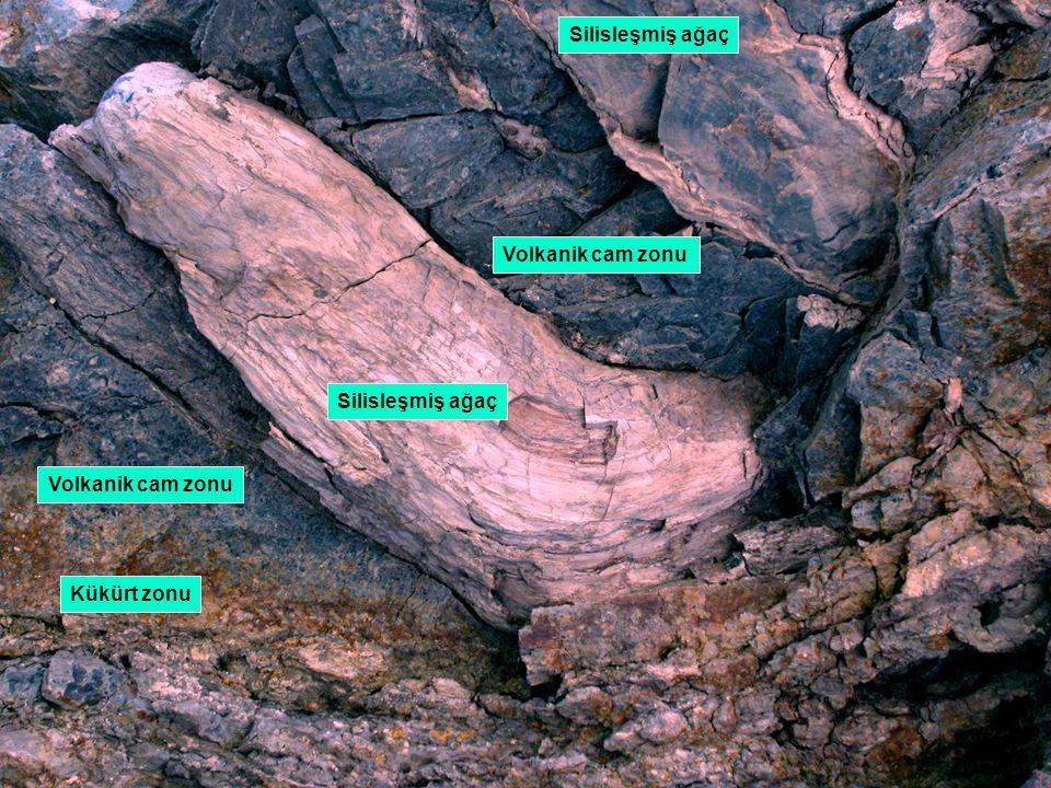 Silisleşmiş ağaç Volkanik cam zonu Silisleşmiş ağaç Volkanik cam zonu Kükürt zonu