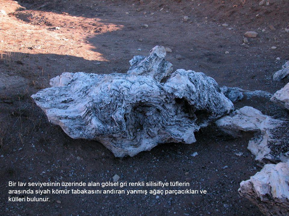 Bir lav seviyesinin üzerinde alan gölsel gri renkli silisifiye tüflerin arasında siyah kömür tabakasını andıran yanmış ağaç parçacıkları ve külleri bulunur.