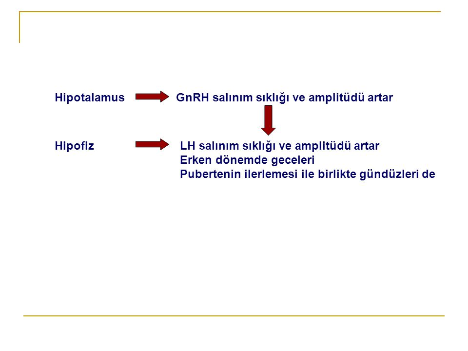 Hipotalamus GnRH salınım sıklığı ve amplitüdü artar. Hipofiz. LH salınım sıklığı ve amplitüdü artar.