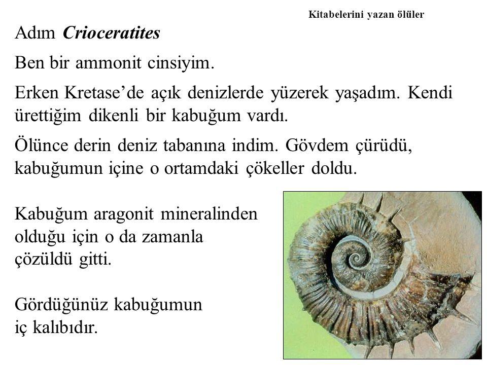 Ben bir ammonit cinsiyim.