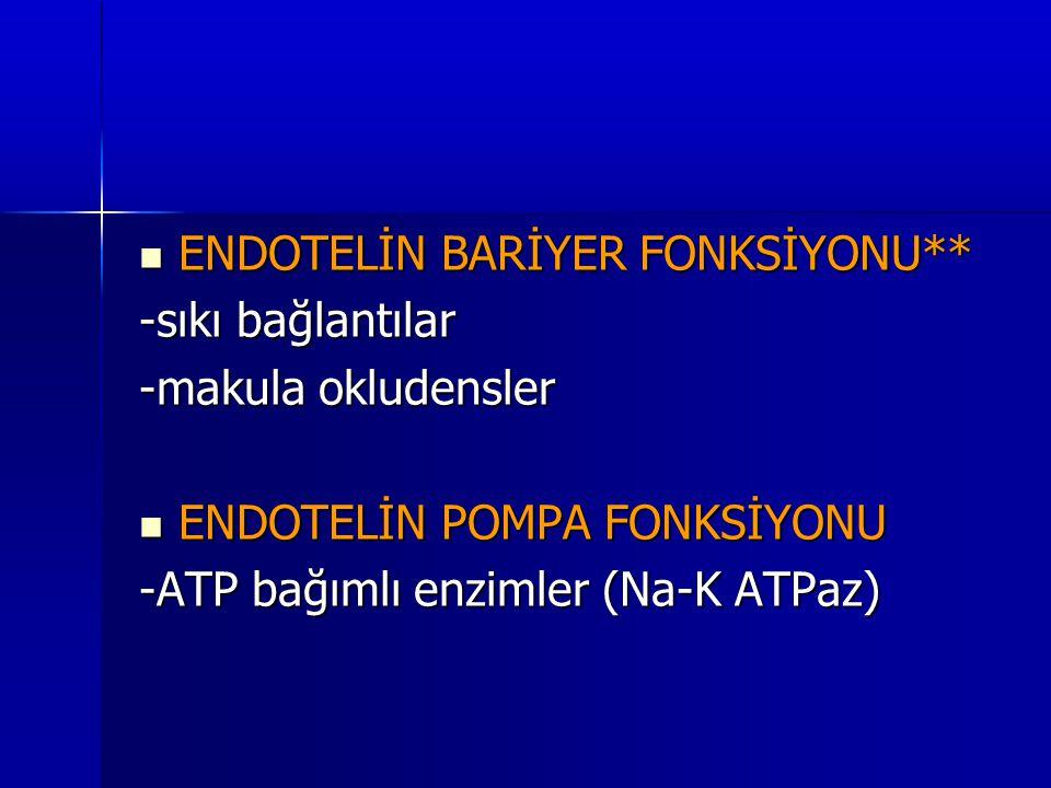 ENDOTELİN BARİYER FONKSİYONU**
