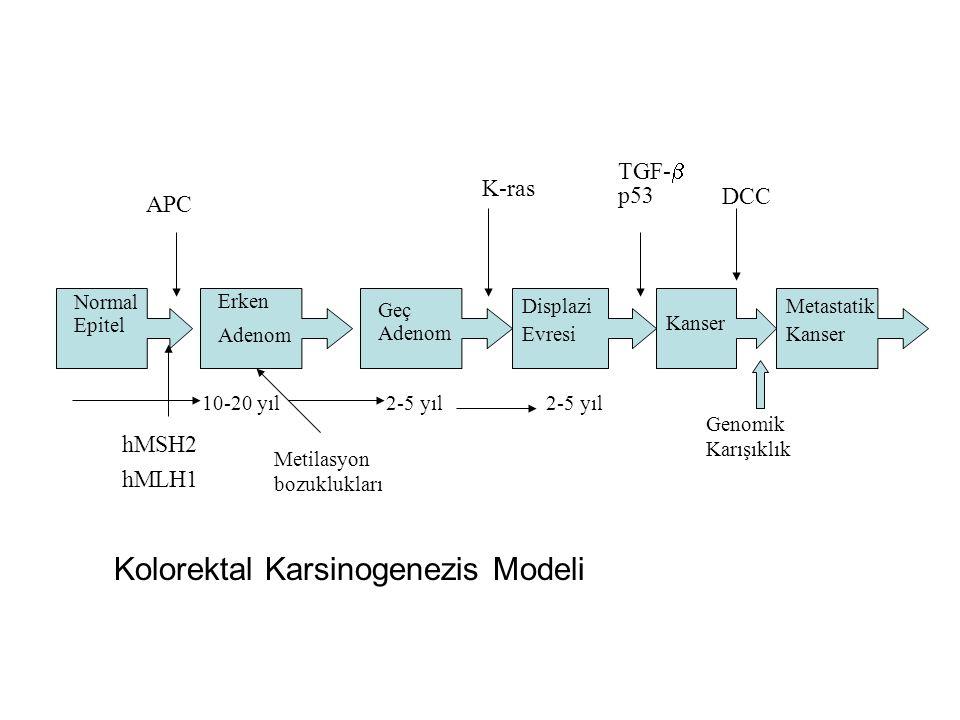 Kolorektal Karsinogenezis Modeli