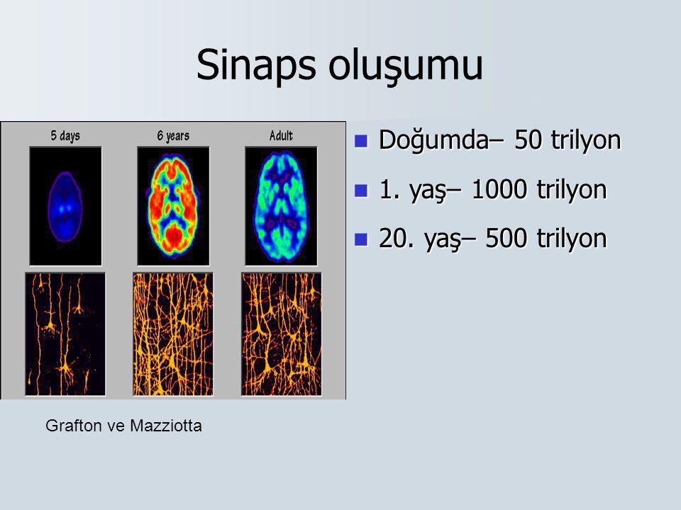 Sinaps oluşumu Doğumda– 50 trilyon 1. yaş– 1000 trilyon