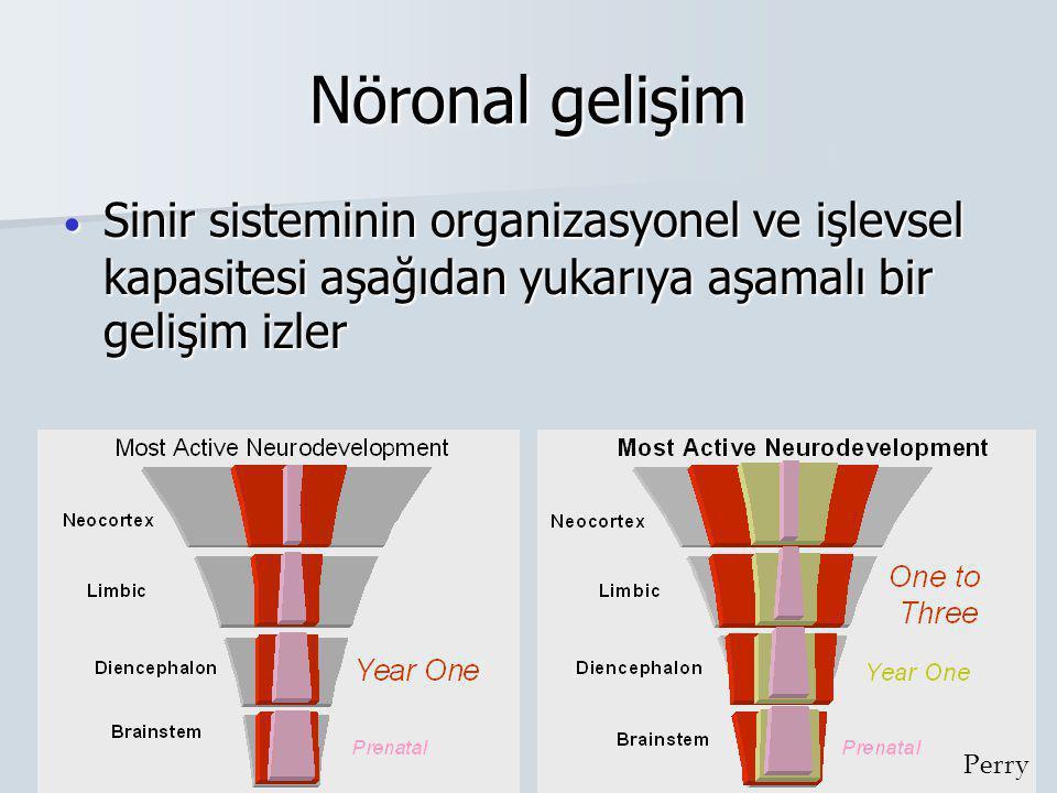 Nöronal gelişim Sinir sisteminin organizasyonel ve işlevsel kapasitesi aşağıdan yukarıya aşamalı bir gelişim izler.