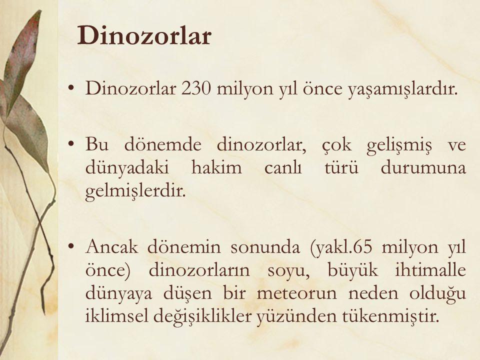 Dinozorlar Dinozorlar 230 milyon yıl önce yaşamışlardır.
