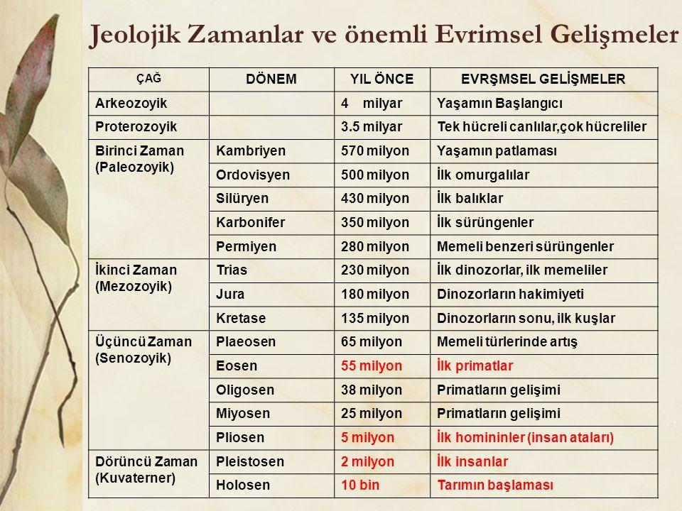 Jeolojik Zamanlar ve önemli Evrimsel Gelişmeler
