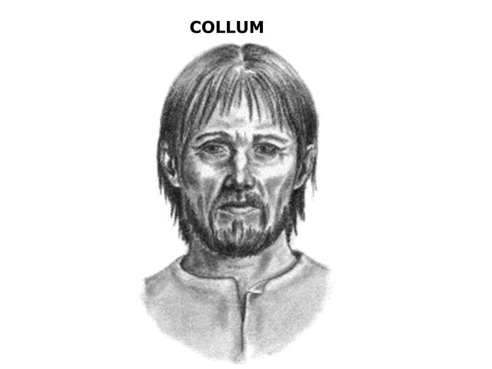 COLLUM