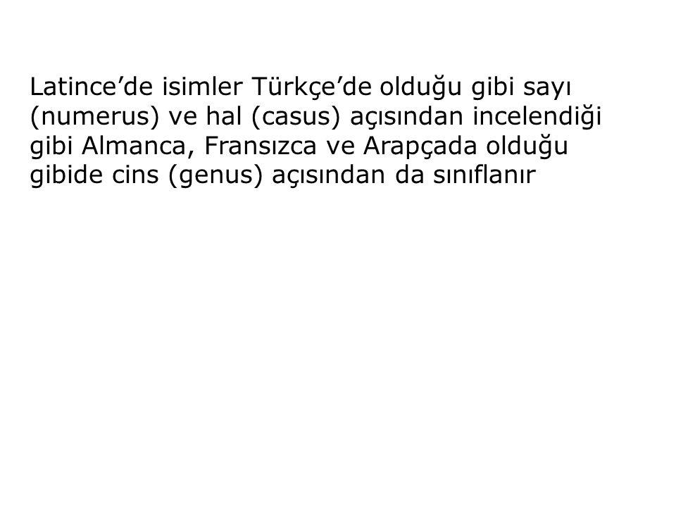 Latince'de isimler Türkçe'de olduğu gibi sayı (numerus) ve hal (casus) açısından incelendiği gibi Almanca, Fransızca ve Arapçada olduğu gibide cins (genus) açısından da sınıflanır