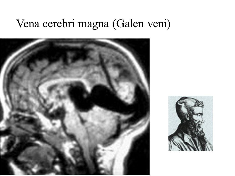Vena cerebri magna (Galen veni)