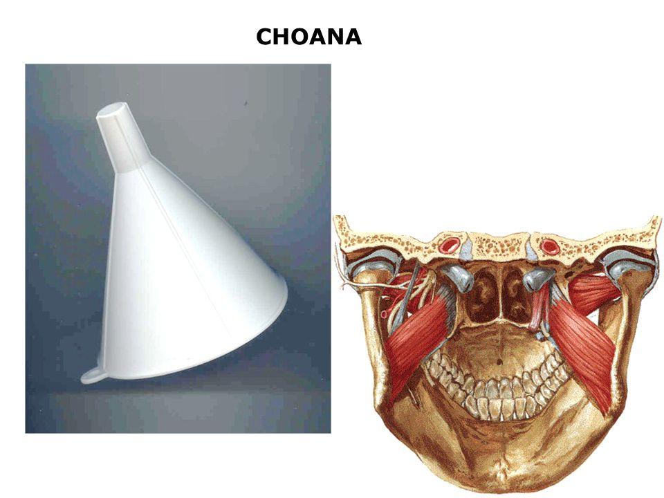 CHOANA