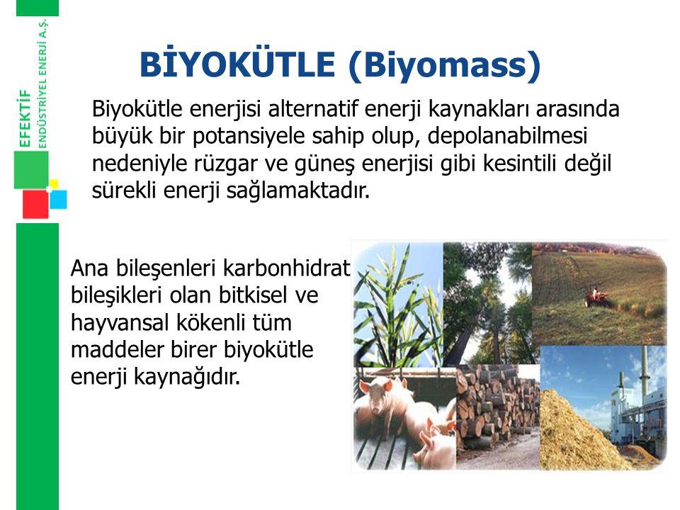 BİYOKÜTLE (Biyomass)
