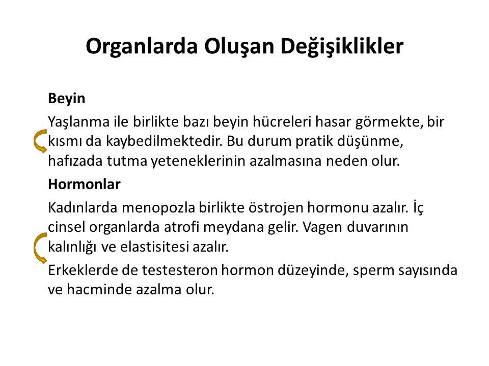 Organlarda Oluşan Değişiklikler