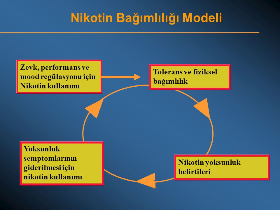 Nikotin Bağımlılığı Modeli