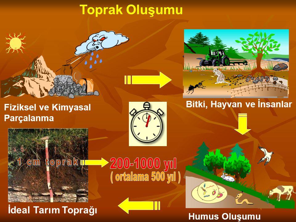 1 cm toprak 200-1000 yıl ( ortalama 500 yıl ) Toprak Oluşumu
