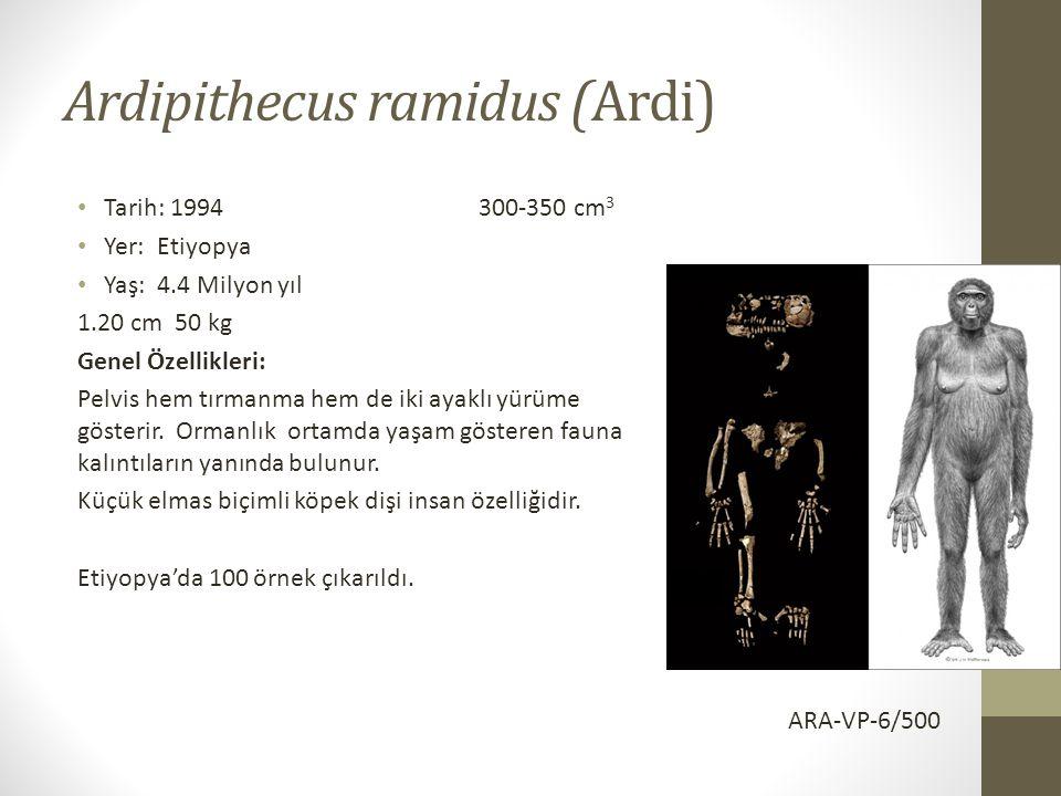 Ardipithecus ramidus (Ardi)