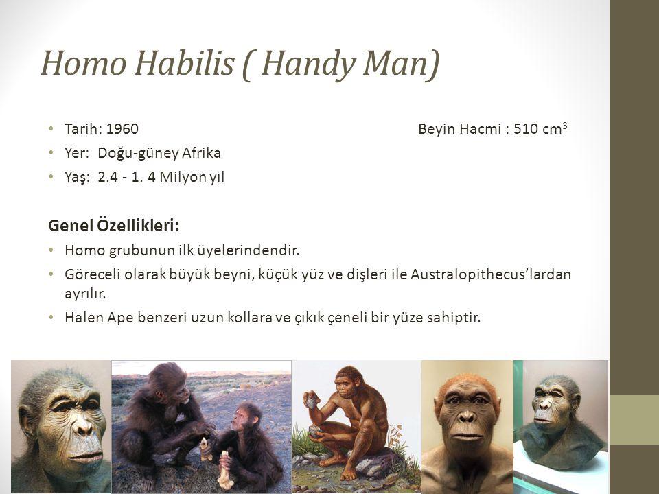 Homo Habilis ( Handy Man)